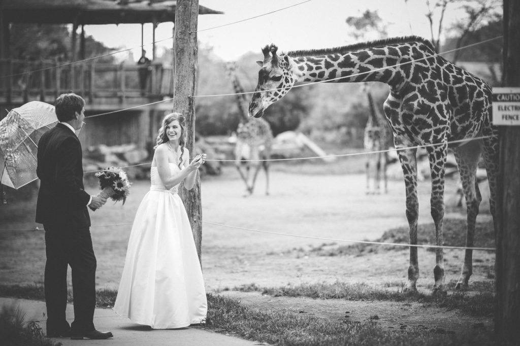 bride and groom giraffe encounter cincinnati zo