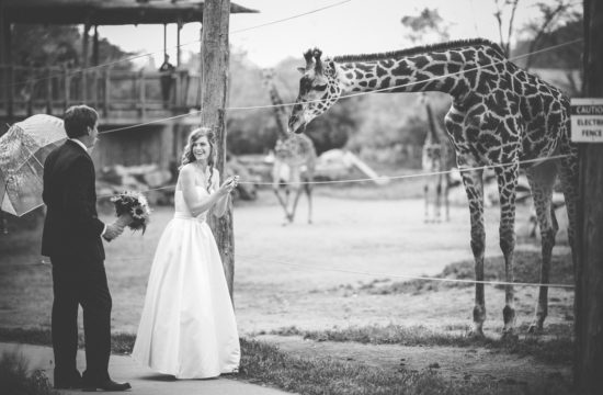 bride and groom giraffe encounter cincinnati zo